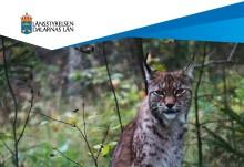 Ny förvaltningsplan för stora rovdjur i Dalarna