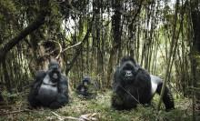 Vier Schweizer unter den Top Fotografen bei den Sony World Photography Awards