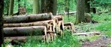 E.ON väljer LRF Konsult för förmedling av stor skogsfastighet i Skåne