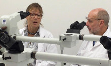 Nya rön: Alzheimer saknar samband med diabetes