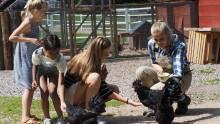 Skånes Djurpark ska anställa 150 ungdomar och 1000 ansökningar förväntas