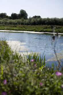 Ny fiskdöd i Källby dammar