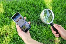 """NABU-Aktion """"Insektensommer"""" geht weiter: Jeder kann sich mit der App """"Insektenwelt"""" an der Zählaktion beteiligen"""