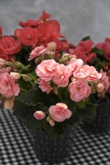 Månadens Blomma - september 2010