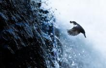 Canon Norge inngår samarbeid med naturfotograf Knut Erik Alnæs