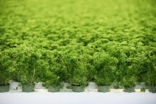 Svegros nya förpackningar minskar plastanvändandet med 70 ton