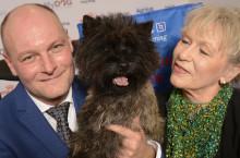 Terrier från Hjo utsedd till Årets utställningshund