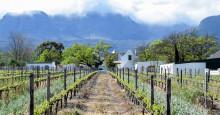 Med gemensamma krafter kan vi förbättra arbetsvillkoren för anställda på vinplantage