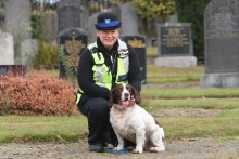 Plain clothes dog-poo patrols unveiled to combat cemetery fouling