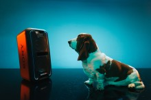 È ufficiale: i cani preferiscono Beyoncé a Beethoven