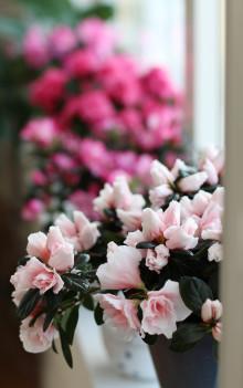 Krukväxternas Dag firar vi den 17 mars