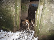 4 dogs rehomed after being kept alongside rotting animals