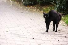 Vorsicht, schwarze Katze von links!