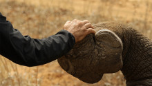 """Eutelsat and Sigfox Foundation join forces to protect rhinos through """"Now Rhinos Speak"""" initiative"""