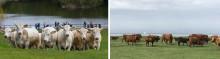 Nu släpps sommarens naturvårdarna på Bunkeflo strandängar och Bulltofta rekreationsområde