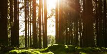Vad ska vårt mest hållbara projekt någonsin heta?