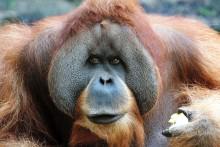 Spannende Veranstaltungen für kleine und große Artenschützer – Entdeckertage im Zoo Leipzig