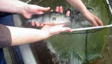 Framtidens fisk kan odlas på pappersbruk
