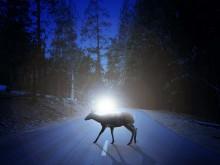 Rekordnivåer för viltolyckor – så undviker du dem