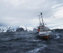 Hvordan skal Norge vinne torskemarkedet i 2021?