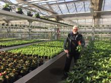 Hephata-Gärtnerei: Laden bleibt geöffnet, Lieferung innerhalb Schwalmstadts möglich