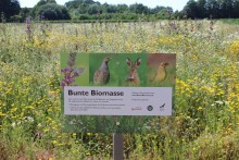 """""""Bunte Biomasse"""" zieht Jahresbilanz"""
