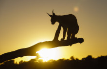 Valokuvat kertovat villieläinten selviytymisestä Namibian suolatasangoilta – mukana myös arvokkaita vinkkejä