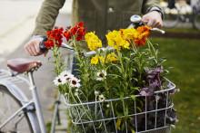 Plantera för vårglädje