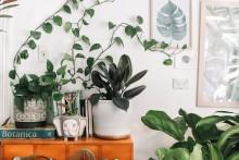 Leder du efter nye møbler og accessories til hjemmet?