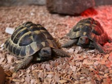 Couple convicted of stealing tortoise from family-run farm