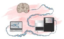 ​New method to identify genes that can drive development of brain tumours