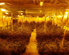 Two men arrested after cannabis factory discovered in Cobham