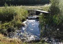 Ny SVU-rapport: Långtidsfunktion hos en 19-årig dagvattenvåtmark (avlopp och miljö)