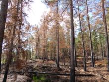Pressinbjudan: Guidad vandring över brandfälten i Brännans naturreservat