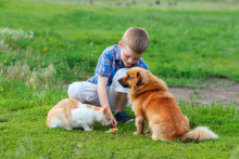 Blueair offers lifeline to people who discover they are allergic to their pet