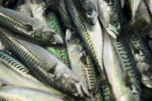 Kina senker importtoll på over 250 sjømatprodukter