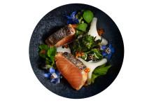 Miljövänligt odlad gourmetfisk tas fram i samarbete mellan forskare, kockar och näringsliv