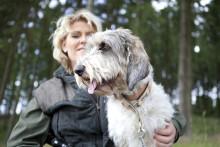 Kraftig ökning av jaktskador på hund