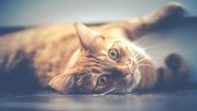 5 tips: Tänk på detta innan du skaffar katt eller hund