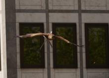 A águia 'FREEDOM' aterra em Colônia