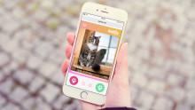 Ny digital tjänst hittar nya hem åt hemlösa katter