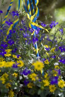 Sommarblommor firar Sveriges nationaldag