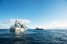 Norwegian seafood exports remain ahead of last year despite a decline in September