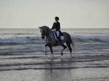 Mental träning för hästen- ett framgångsrecept
