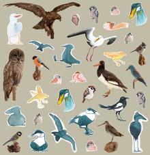 Inbjudan till pressvisning 17/9 av utställningen Vi fåglar - fåglarnas egen berättelse