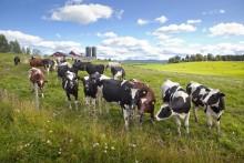 Norrmejerier i topp bland norrländska konsumenter