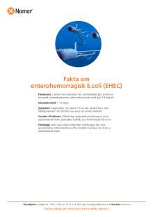 Fakta om enterohemorragisk E.coli (EHEC)