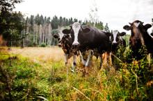 Livsmedelsbranschen kraftsamlar: Utvecklar nya kriterier för antibiotika till livsmedelsproducerande djur
