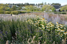 Sollentuna i topp fem av Sveriges bi-vänligaste kommuner