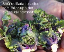 Gott och Nära berättar om den stora snackisen i grönsaksdisken - Flower Sprouts!